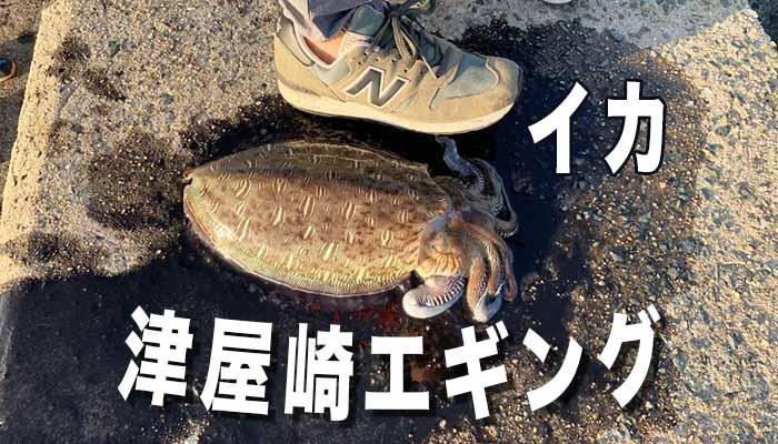 津屋崎 イカ エギング