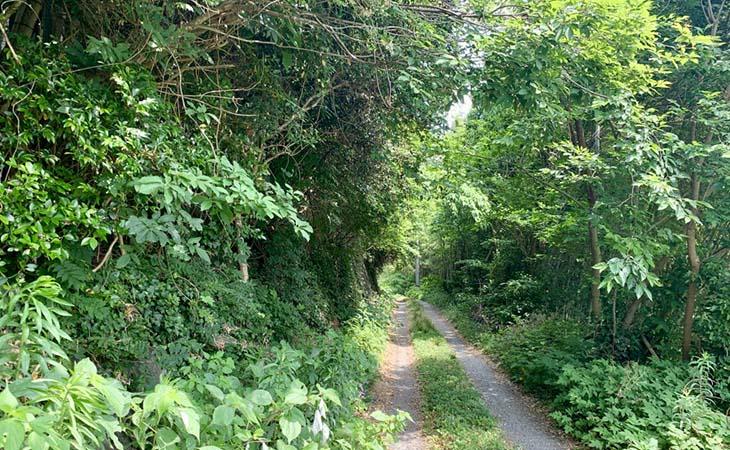 古賀市の竹林