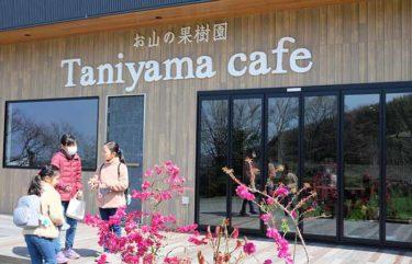 古賀市谷山にあるお山の果樹園「Taniyamaカフェ」で自然とランチを満喫